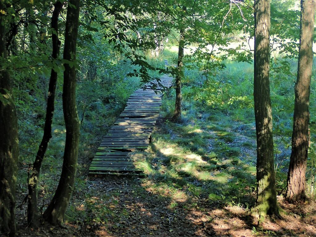 Csörgőszeri patak fölötti fapalló Forrás: Nyáry Tamás