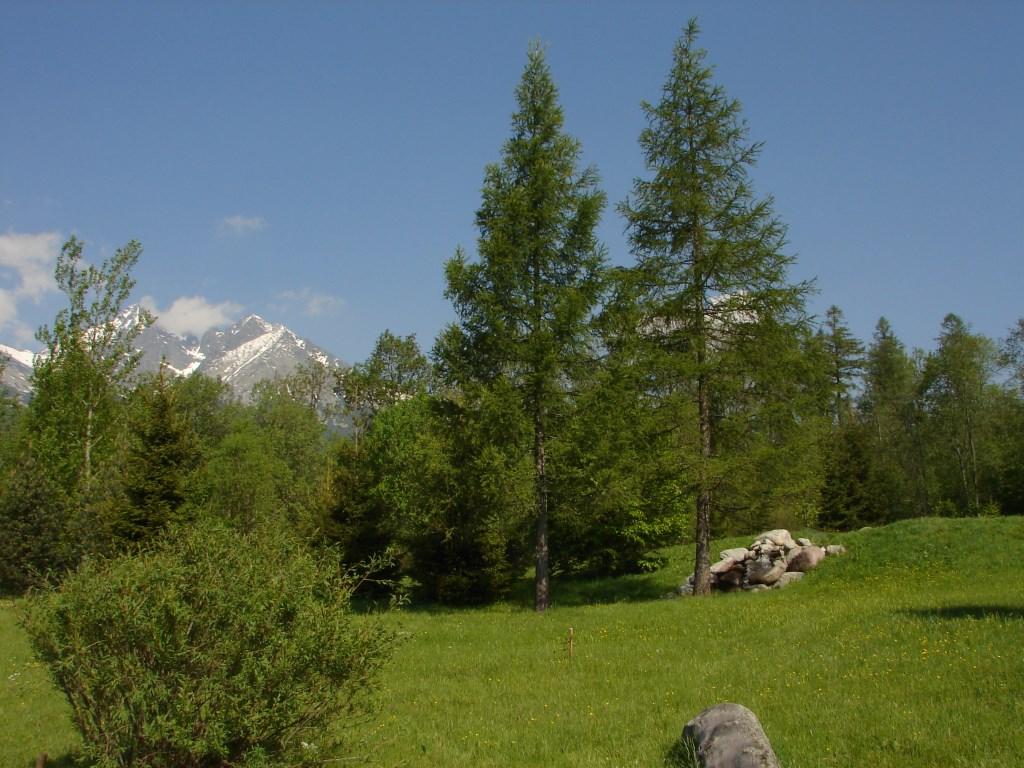 Tátralomnicról a Kő-pataki-tó mellett Ótátrafüredre ForrĂĄs: Nagy Árpád