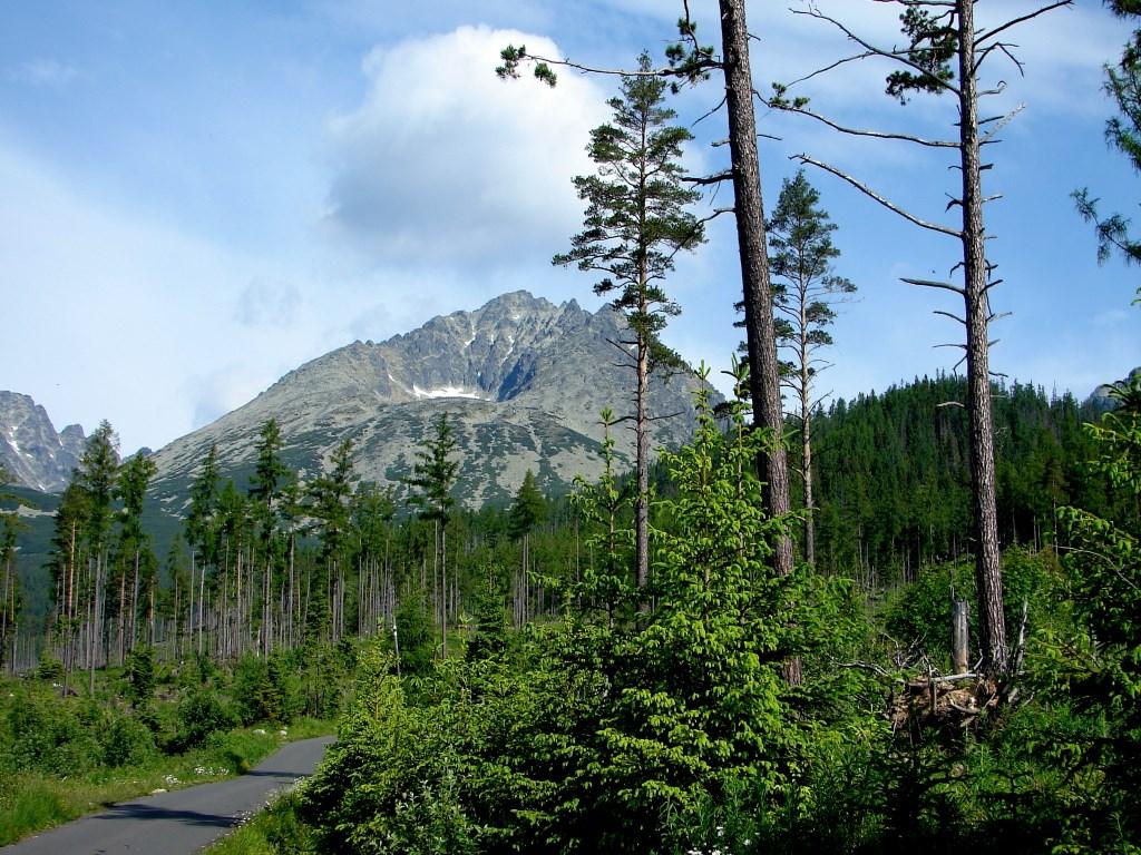 Tátraszéplakról a Batizfalvi-tó mellett a Csorbai-tóhoz ForrĂĄs: Nagy Árpád