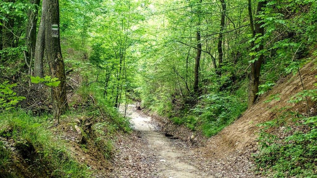 Ez az ösvény visszavisz Telkibe Forrás: Nyáry Tamás