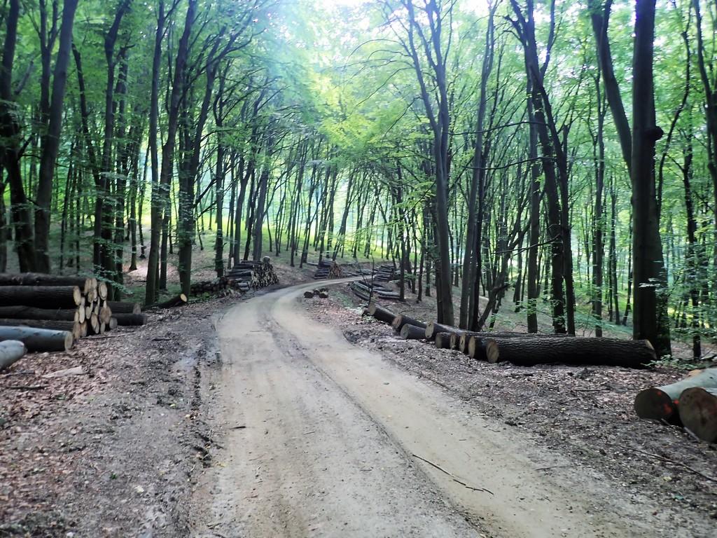 Tovább az erdőben a piros jelzésen Forrá¡s: Nyáry Tamás