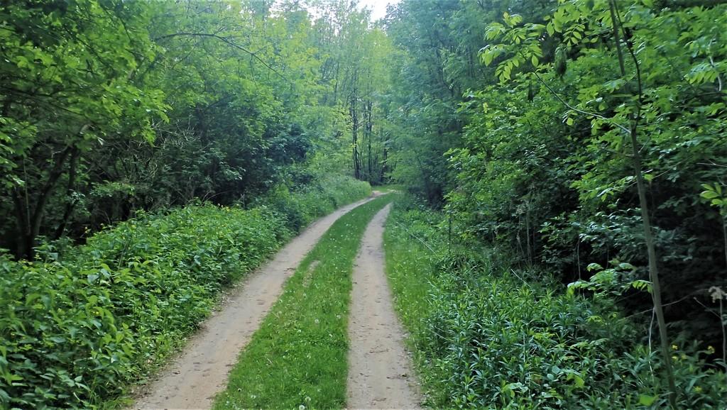 Kellemes séta az erdőben Forrás: Nyáry Tamás
