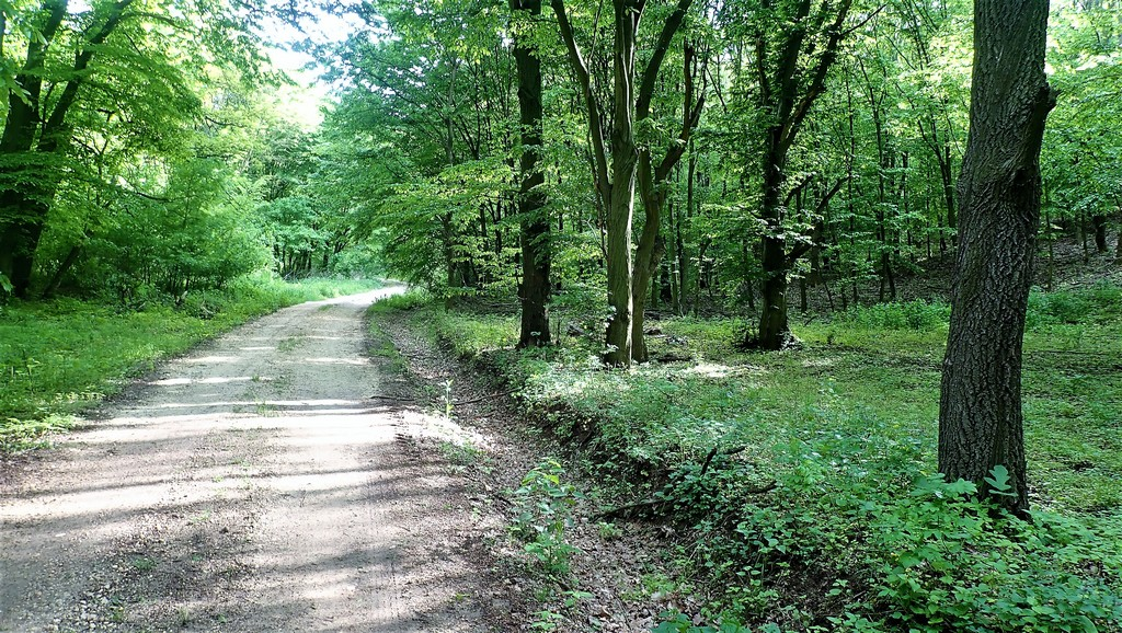 A hegy tövében árnyas sétán vezet vissza a sárga jelzésre Forrás: Nyáry Tamás