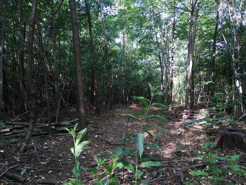 Keresztúri-erdő tanösvény ösvény Forrás: Mozgásvilág