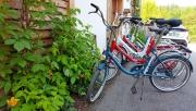 Bledi-tó kör Pony kerékpárokkal | www.mozgasvilag.hu