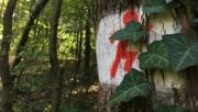 Keresztúri-erdő futókör