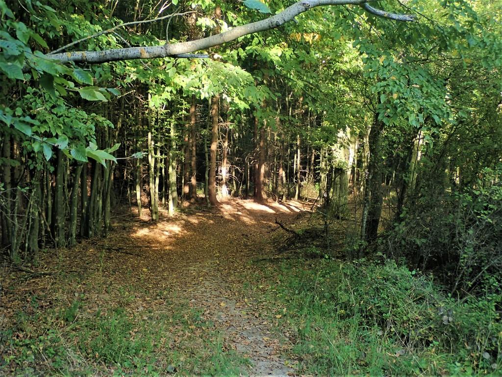 Kanyargós út az erdőben Forrás: Nyáry Tamás