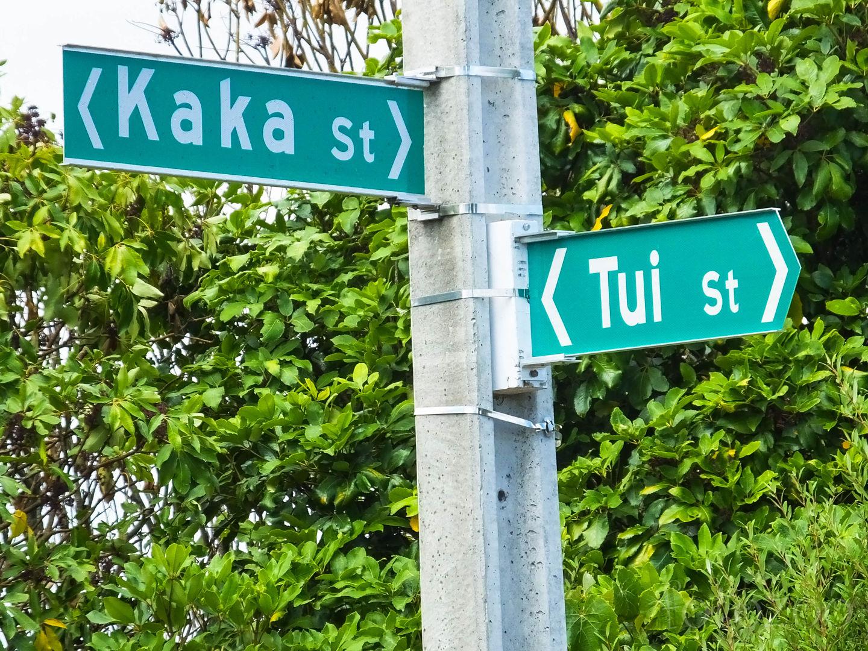 Két jómadár - a Tui és a Kaka utca sarka. Forrás: Fotozoo - Horváth Zoltán
