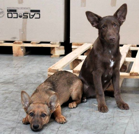 Casco állatmenhely Forrás: Casco
