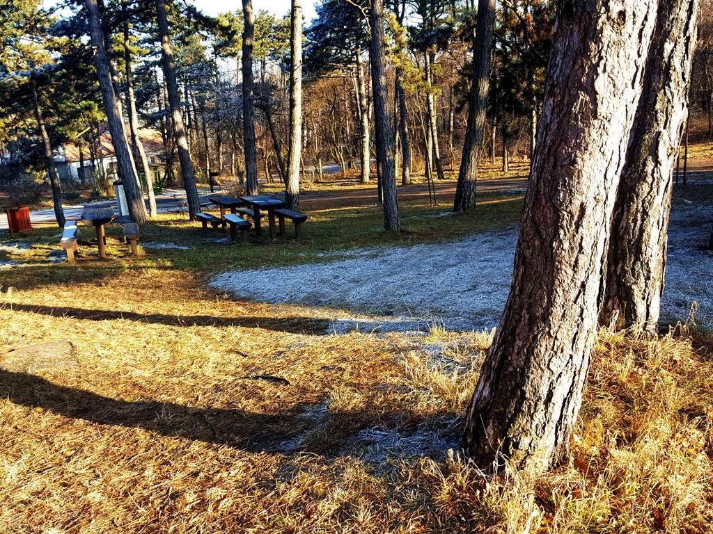 A turistaház közvetlen közelében magas fenyőfák állnak Forrás: www.mozgasvilag.hu