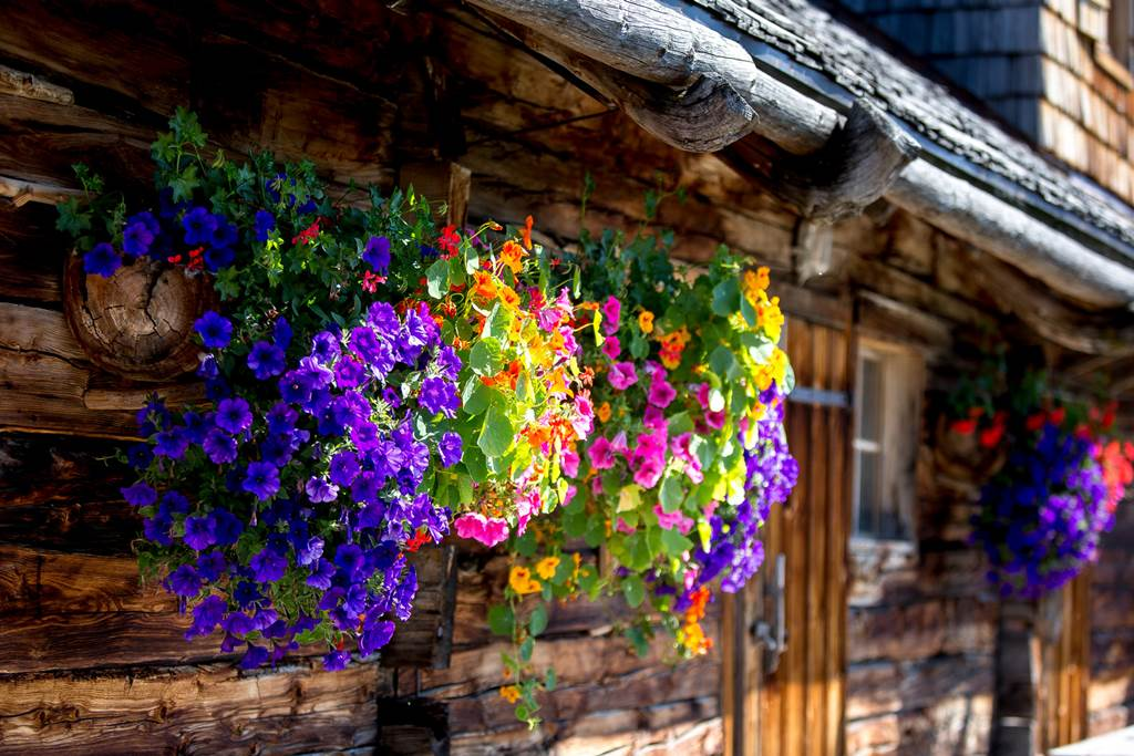A nyár színei Forrás: (c) Steiermark Tourismus Ikarus.cc