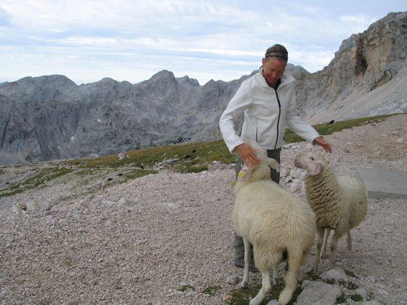 Kezes bárányok