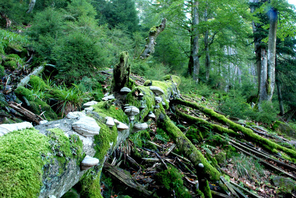 Fekete-erdő Nemzeti Park Forrás: Nationalpark Schwarzwald / Charly Ebel