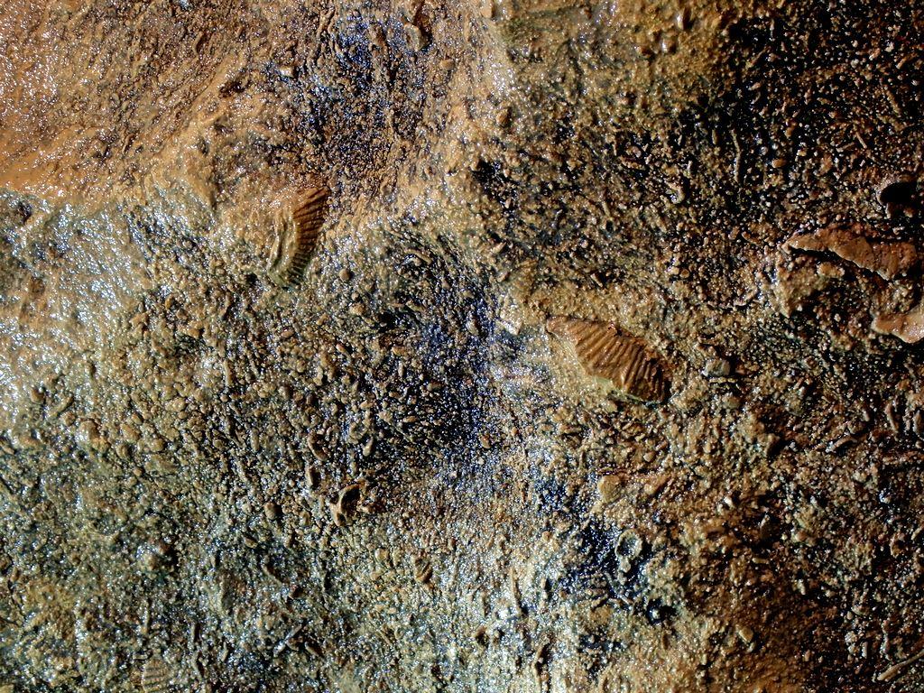 Mészkő fosszíliák Forrás: Nyáry Tamás