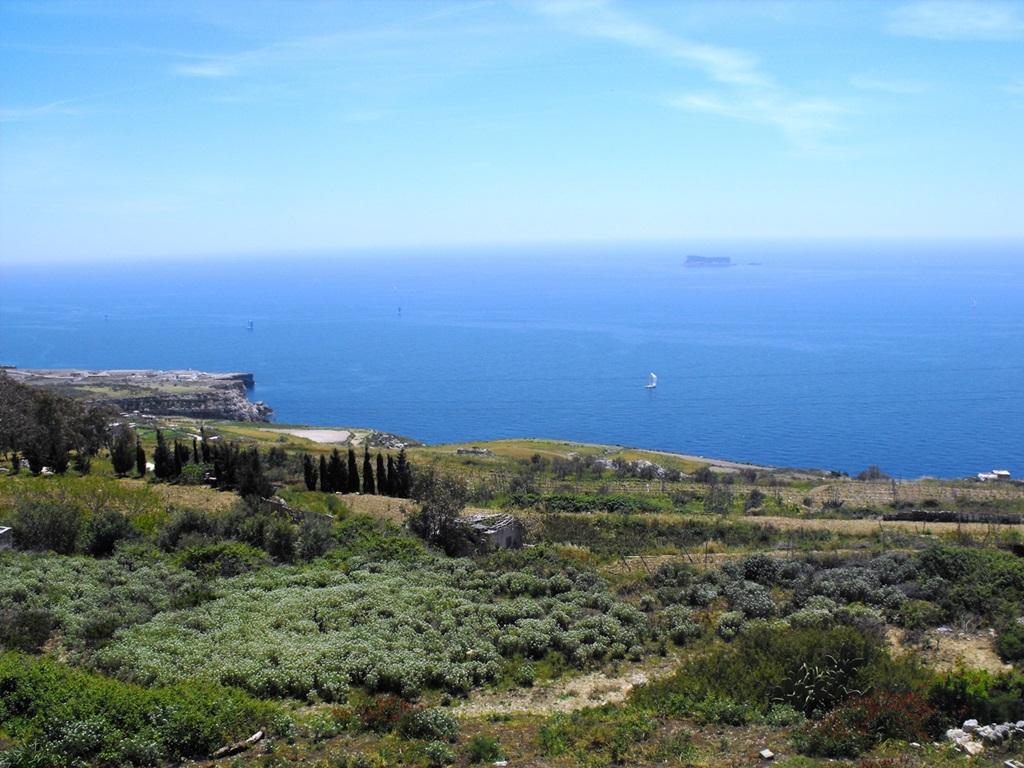 Fawwara növényvilág Forrás: Máltai Idegenforgalmi Hivatal