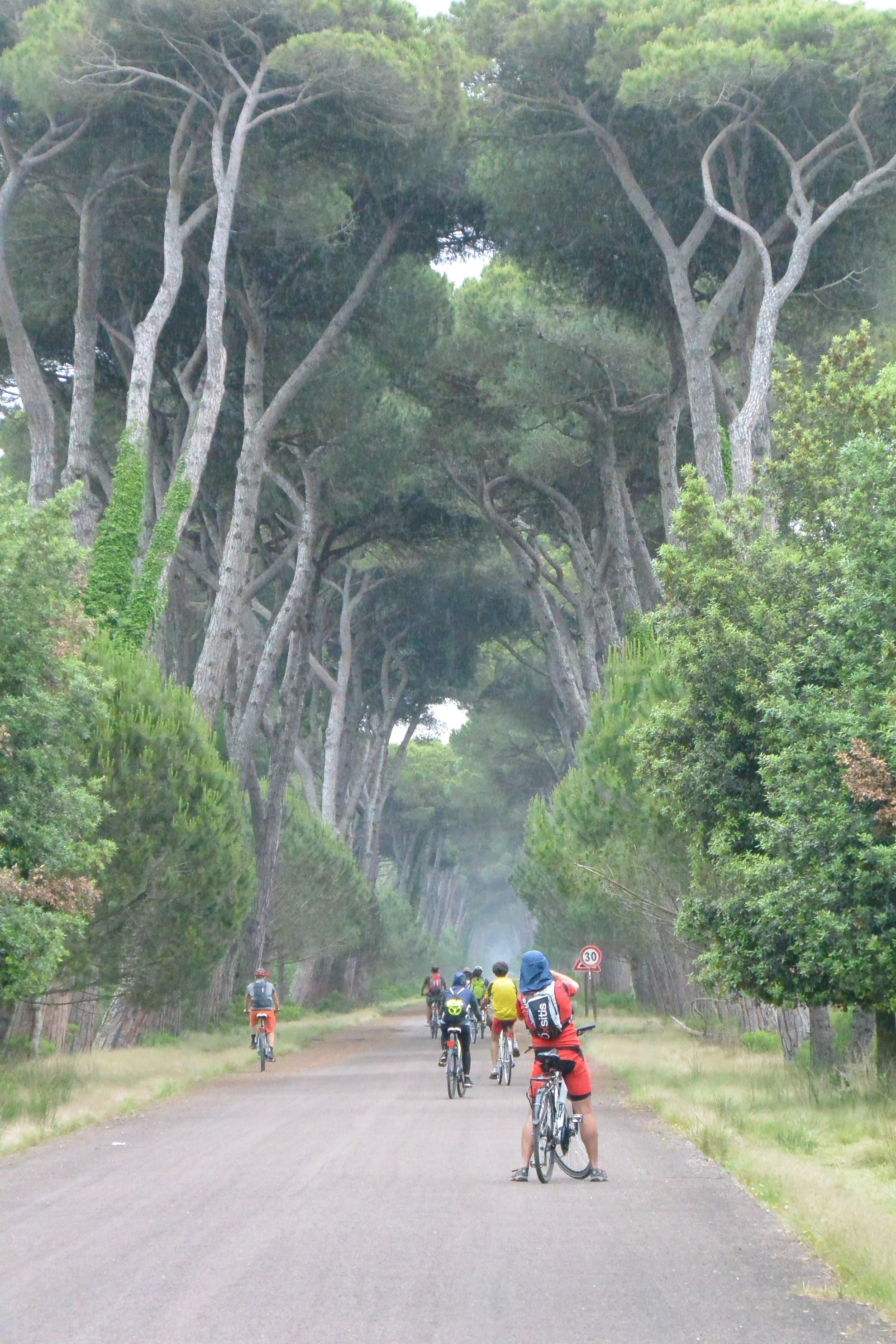 Migliarino San Rossore Massaciuccoli Nemzeti Park Forrás: Soul running