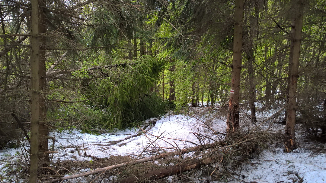 Kommentár nélkül Forrás: MB Trail/Stramszky Judit