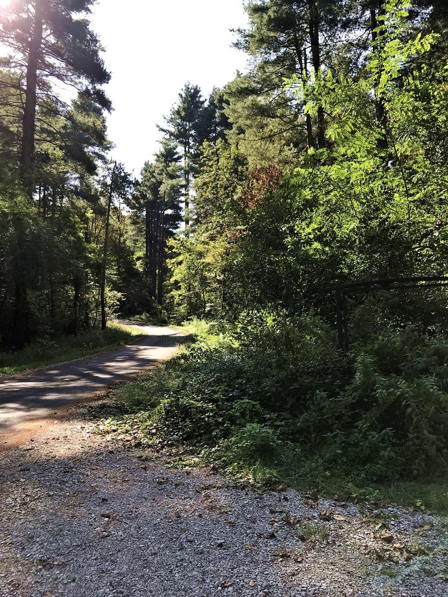 Karlovaci erdőrészlet Forrás: Nedjalkov Anna Beáta
