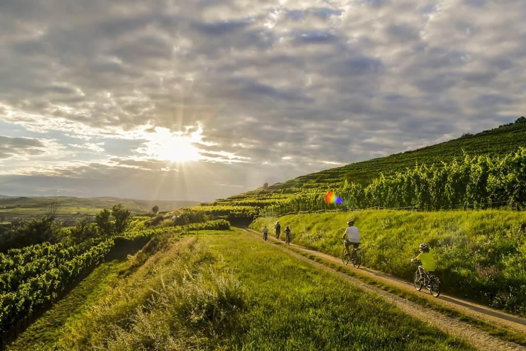 Kamptal kerékpárút Forrás: (c) Alsó-Ausztria