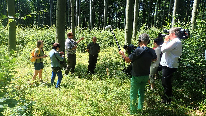 Elmer Tamás, a Magyar Erdészeti Egyesület főtitkára és egyben a Vándortábor projekt felelős koordinátora nyilatkozik az erdő közepén Forrás: Nyáry Tamás