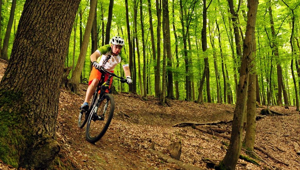 Akcióban-árnyas fák között áttetsző a lencse Forrás: Paraferee Mozgásvilág.hu