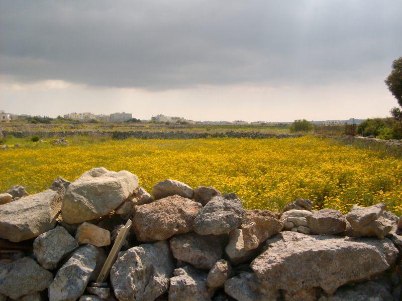 Virágos mező a fal mentén Forrás: Victoria Lines Malta