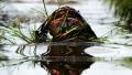 Lehet még nevezni a 2011-es mocsár VB-re | www.mozgasvilag.hu