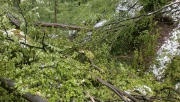 Balesetveszély miatt nem látogathatóak egyes területek a Pilisi Parkerdőben | www.mozgasvilag.hu