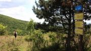 Muzsla Trail terepfutó verseny: A babaarcú gyilkos