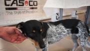 Casco állatmenhely és a fenntartható fejlődés
