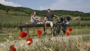 Kerékpáros, kulináris és kulturális élmények a Bécsi erdőben