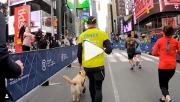 Vak futó és vezetőkutyája írt történelmet a New York Félmaratonon