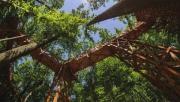 A természetjárás feltételeit javító fejlesztések indultak erdeinkben!