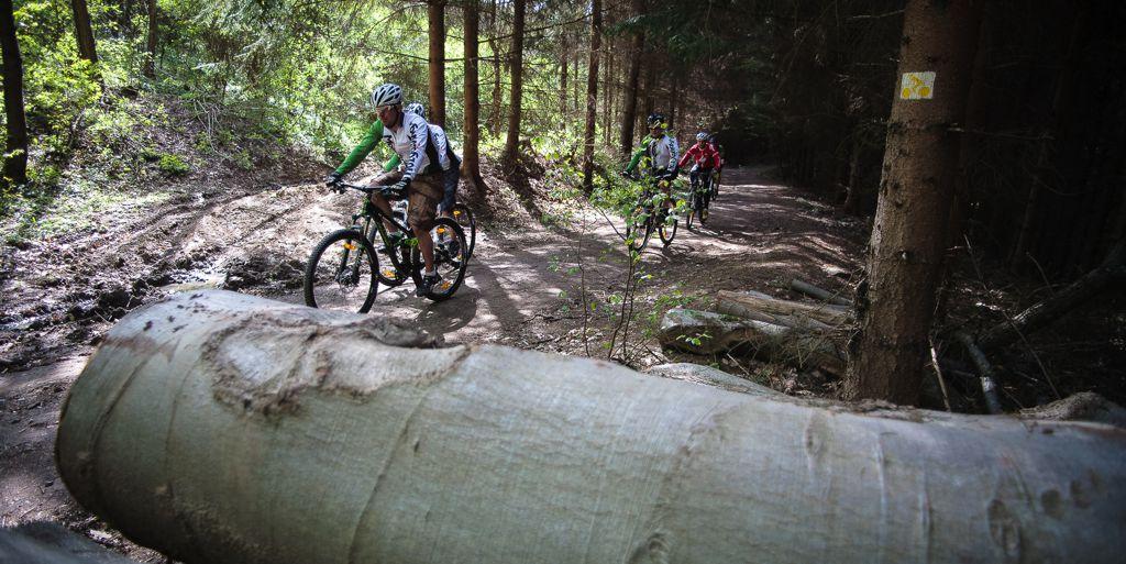 Kerékpározásra kijelölt erdei útvonal Forrás: Kimura