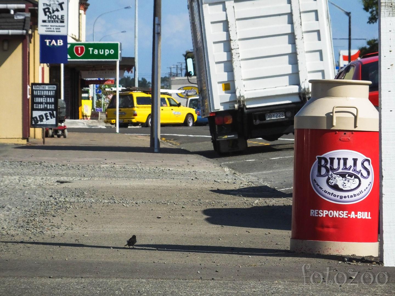 Újabb mókás város – Bulls. Rengeteg szóvicc jön szemben az utcán, ha figyelmesen közlekedünk. Forrás: Horváth Zoltán - Fotozoo