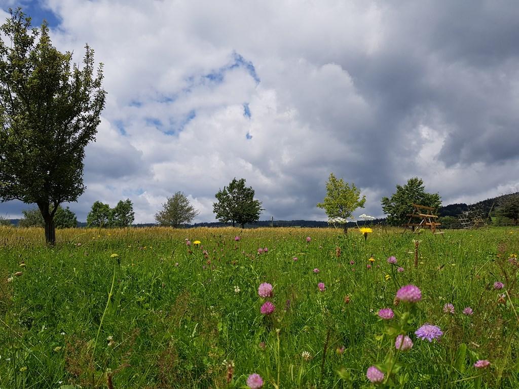 Nyári virágzás Joglland-Waldheimatban Forrás: (C) TV Joglland-Waldheimat, Gernot Schafferhofer