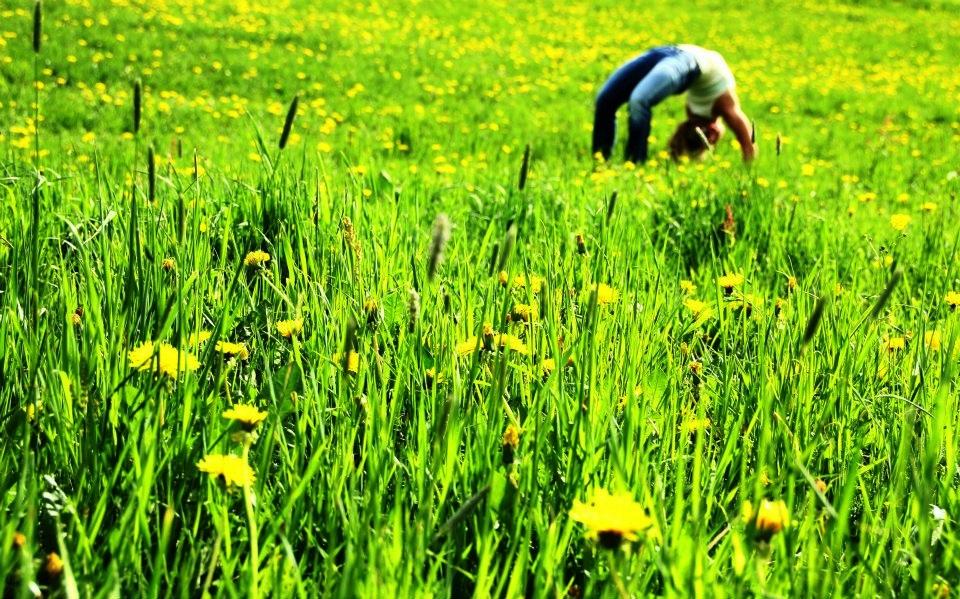 Jóga a mezőn