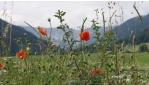 Jóga a Turnauer Alm hegyi legelőn | www.mozgasvilag.hu