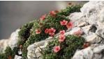 5-7 napos Vadvirág Fesztivál csomagajánlat