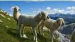 Túrák a Krn hegy ölelésében | www.mozgasvilag.hu